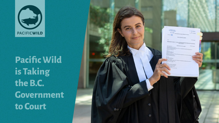 Pacific Wildis Takingthe B.C. Governmentto Court